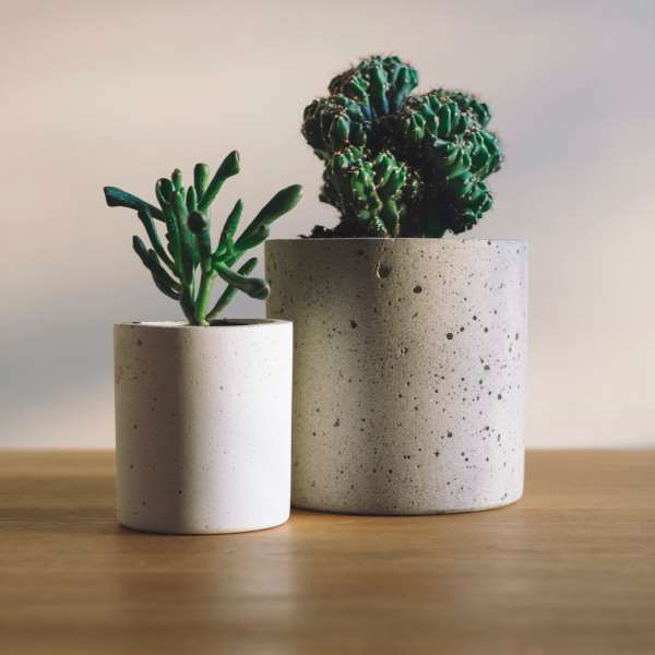 two potted plants beside eachother